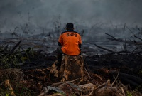 Incendios forestales consumen el bosque tropical de Indonesia