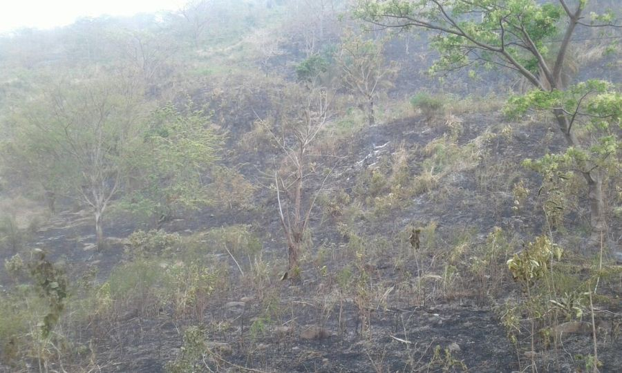 Chontales sufre incendios forestales. Mercedes Sequeira/END